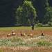 Elk at Sunday Brunch