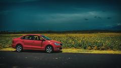 Skoda Rapid. (Prabhu B Doss) Tags: prabhubdoss skoda rapid sunflower fields fujifilm gfx50s gf3264mm travelphotography car auto