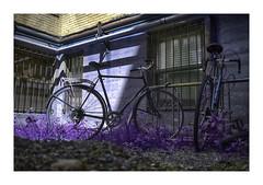 Cracked Bikes (VanveenJF) Tags: boston bikes bicycle massachusetts alley backlane usa fiets artsy purple rain building urban old blue architecture