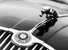 Vintage Jaguar XK150 badge (uluqui) Tags: canon 6d car motorsport motor race sport classic legend racing historic circuit france automotive automobile racecar vintage peterauto dijon dijonprenois motion speed jaguar xk150 badge blackandwhite bw noiretblanc