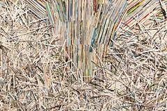 Schnippel Schnappel )a (Rasande Tyskar) Tags: ellen junger fauntain hamburg millerntor gallery 2019 art shredder papier paper cuts streifen band strip