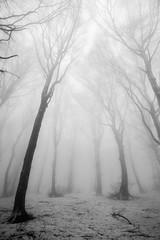 "Misty forest <a style=""margin-left:10px; font-size:0.8em;"" href=""http://www.flickr.com/photos/30423982@N04/48238225561/"" target=""_blank"">@flickr</a>"