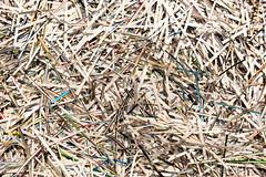 Schnippel Schnappel )c (Rasande Tyskar) Tags: ellen junger fauntain hamburg millerntor gallery 2019 art shredder papier paper cuts streifen band strip