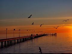 Golden Frankston - Australia (rosgloryfire) Tags: people birds pier seascape color australia bay evening scenic reflections dusk water olympus clouds goldenhour sunset sun sea sky nature landscape