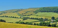 A very hot day, Abbotsbury, Dorset, England (Oswald Bertram) Tags: dorsetaonb westdorset countryside jurassiccoast greatbritain uk summer verano été estate sommer