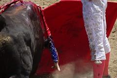 pies juntos (aficion2012) Tags: doña maría cascón novillada raso de portillo aquilino girón corrida novillero novillo bull bullfight cor muleta francia france tauromachie tauromaquia giron torero toro taureau