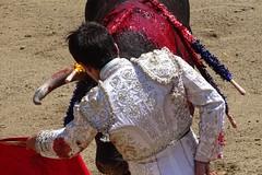 derechazo (aficion2012) Tags: doña maría cascón novillada raso de portillo aquilino girón corrida novillero novillo bull bullfight cor francia france tauromachie tauromaquia giron torero toro taureau