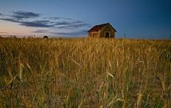 La casa de renfe (pascual 53) Tags: canon 5ds 1635mm ocaso navarra renfe trigo largaexpo colores paisaje pascual53