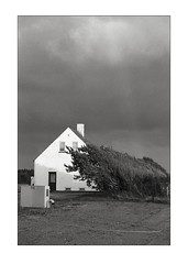 The way the wind blows… (K.Pihl) Tags: bw film monochrome clouds analog denmark blackwhite windy schwarzweiss zuiko50mmf14 olympusom4 perceptolstock vitskøl pellicolaanalogica 400tx