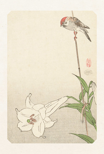 48-Carte postale // 10x15cm // Bird on Lily
