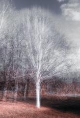 Silver birch in the round (paulbnashphotography (ARPS)) Tags: silver birch round pep nature tree multiple exposure pepventosa ventosa naturephotography naturephoto white trees