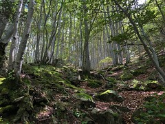 Magic forest (rob kraay) Tags: trees moss robkraay leaves stones treetrunks woods forest