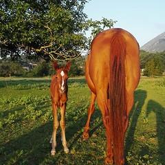El #potro de Pelusa 🐴 cumplió estos días 365 vueltas al sol ☀️ . Felicidades‼️Estamos muy contentos 😁 de tenerlo en la familia ❤️ . .foto de 2018 . #cuadraelalisal #nuestroscaballos #caballos #horse #horselove #horselife #hor