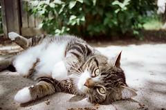 Nikon FE 28mm Cinestil 50D (Jennaasucks) Tags: catphotography cat film nikonfilm filmphotography filmisnotdead nikonfe cinestil50d cinestil