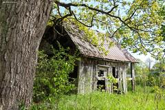 Fade Away (gabi-h) Tags: oldshack princeedwardcounty pointtraverse gabih trees summer windows windowswednesday longpoint nature bark