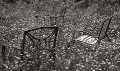 groundhog8 (dougwoods12345) Tags: places ontario timmins groundhoglake