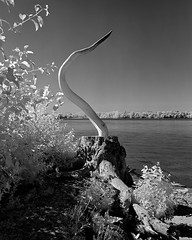 Remic Rapids, Ottawa (Howard Sandler (film photos)) Tags: infrared film ottawa sculpture rapids koniomega 6x7 mediumformat blackandwhite xtol omegon rollei ir400