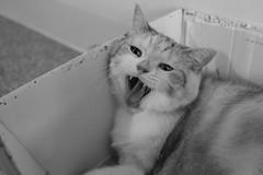 (冰冷熱帶魚) Tags: fujifilm xpro2 digital xf23mm cat tatami