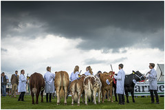 Cattle Class (AEChown) Tags: bullocks cattle countryshow heathfieldshow agriculturalshow competition farming documentary judging youngfarmers