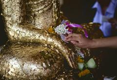 Covered in Gold (toastal) Tags: buddha isaan thai thailand ubon watmahawanaram holy ritual statue temple wat ubonratchathani