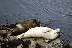 Mother seal and puppy (Thelma Gatuzzo) Tags: travel usa nature natureza eua viagem 2019 travelphotography thelmagatuzzo© canoneosr wildlife seals