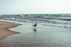 IMG_6877 (Tom_Yaam) Tags: warren dunes beach friends tom yaam starsic patagonia jam kan