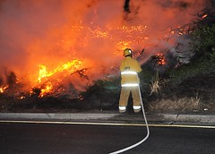 Brush Fire 405/Roscoe (LAFD) Tags: losangeles sanfernandovalley brushfire freeway rickmcclure lafd losangelesfiredepartment
