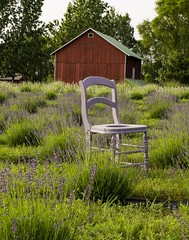 Where else? (Dr. Farnsworth) Tags: chair purple lavender field color match red barn traversecity mi michigan summer july2019