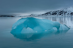an Iceberg floating in Lilliehookfjord in a misty day - Svalbard Islands (Palnick) Tags: bear winter sea wild sky white snow cold color ice nature water norway fur mammal outdoors islands frozen paw marine melting natural snowy walk north mother large pole glacier svalbard formation change species hunter iceberg polar predator climate warming spitsbergen vulnerable condition maritimus