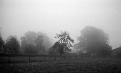 Misty illusion (Rosenthal Photography) Tags: asa400 kleinbildformat ilfordlc2912920°c9min ff135 analog ilfordhp5 epsonv800 olympustrip35 schwarzweiss frühling ilfordrapidfixer 35mm sommer 20190601 mistyillusion mist fod illusion landscape june morning meadow fields mood farm fog blackandwhite olympus olympus35 trip trip35 dzuiko zuiko 40mm f28 ilford lc29 129 14 rapid fixer epson v800