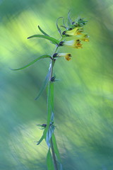 Untitled (jttoivonen) Tags: nature flower plant macro closeup green summer finland outdoors creativecommons yellow flora bokeh