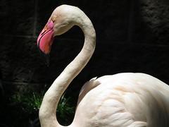 Make Sure You Get My Good Side (Multielvi) Tags: cape may county zoo new jersey nj animal bird flamingo