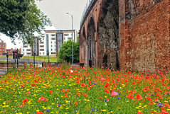Photo of Wild flower planting by Worcester Railway arches