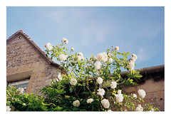 FILM - cottage roses (zuffleking) Tags: fed2 jupiter3 kodakektar100