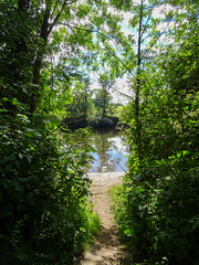 Foliage and the river Dee, 2019 Jul 05 (Dunnock_D) Tags: britain chester dee england gb uk unitedkingdom bushes grass green river riverbank sand sky trees white