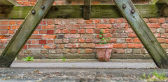 Ground level. (3 of 3) (+Pattycake+) Tags: summer station museum norfolk railway trains 1855mm whitwellreepham canoneos70d whitwellandreepham ©patriciawilden2019 9jul19 wood red plant brick green table terracotta textures pot pov groundlevel lowpov