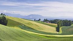 Fields at Burtigny (Karl Le Gros) Tags: 2019 cantondevaud panorama plateaudeburtigny switzerland xaviervonerlach landscape fields greenfields hugin panini countryside lebeaupaysdevaud