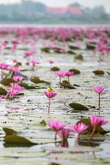 UbonThani_6279 (Jean-Claude Soboul) Tags: thailand thailande canon ubon happyplanet asiafavorites