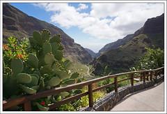 Gran Canaria - Barranco de Guayadeque (hjhoeber2) Tags: spain touit2812 distagon 18mm 12mm zeiss sony a6000 sonyilce landscape nature grancanaria emount carlzeiss kanaren canarischeeilanden barranco za cactus kakteen