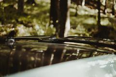 GTI CARBON (Razzu17) Tags: