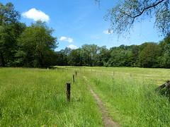 A lovely path on Wilmersberg estate - De Lutte (joeke pieters) Tags: 1470916 panasonicdmcfz150 twente overijssel nederland netherlands holland wilmersberg land landscape landschaft paysage twentsewallen