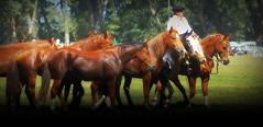 Alazanes (Eduardo Amorim) Tags: cavalos caballos horses chevaux cavalli pferde caballo horse cheval cavallo pferd cavalo cavall tropilla tropilha herd tropillas tropilhas 馬 حصان 马 лошадь crioulo criollo crioulos criollos cavalocrioulo cavaloscrioulos caballocriollo caballoscriollos ayacucho provinciadebuenosaires buenosairesprovince argentina sudamérica südamerika suramérica américadosul southamerica amériquedusud americameridionale américadelsur americadelsud eduardoamorim gaucho gauchos gaúcho gaúchos