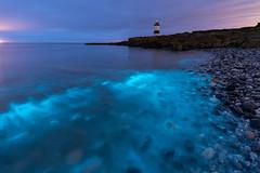 Blue Wash (Kristofer Williams) Tags: bioluminescence plankton penmon anglesey lighthouse sea water pebbles coast shore shoreline night nightscape landscape bioluminescent waves wales