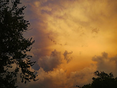 Awesome Sky. (dccradio) Tags: lumberton nc northcarolina robesoncounty outdoor outdoors outside sky eveningsky nature natural clouds stormclouds canon powershot elph 520hs july monday mondayevening goodevening yellowsky foliage leaf leaves tree trees branch branches treebranch treebranches greenery summer summertime