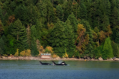 06.22.2019 (TheWeltyFamily) Tags: canada june vancouver britishcolumbia 2019 theweltyfamily vancouverisland orca killerwhale cowichan cowichanbay oceanecoventures biggskillerwhale