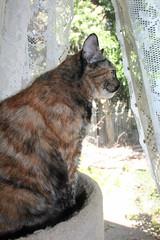IMG_14048 (mudsharkalex) Tags: california tracy tracyca cat cats kitty kitties kitten kittens gato cali