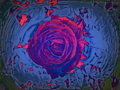 Summer Rose (Rollingstone1) Tags: summerbreeze summerrose rose flower vivid colour psychedelic nature shakespeare verse poem floating swirl flora summer art artwork