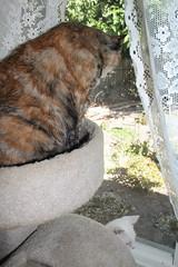 IMG_14047 (mudsharkalex) Tags: california tracy tracyca cat cats kitty kitties kitten kittens gato salt cali
