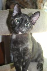 IMG_14051 (mudsharkalex) Tags: california tracy tracyca cat cats kitty kitties kitten kittens gato pepa