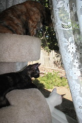 IMG_14050 (mudsharkalex) Tags: california tracy tracyca cat cats kitty kitties kitten kittens gato salt pepa cali